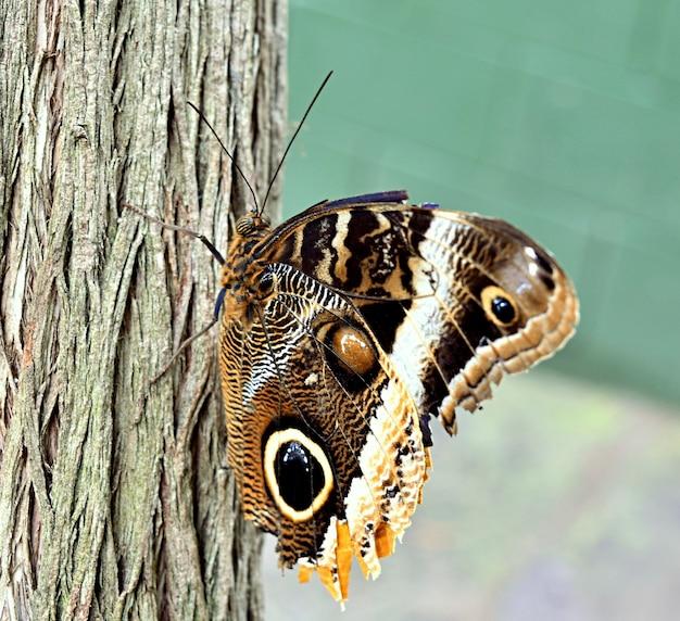 Крупным планом коричневая бабочка на коре дерева под солнечным светом Бесплатные Фотографии