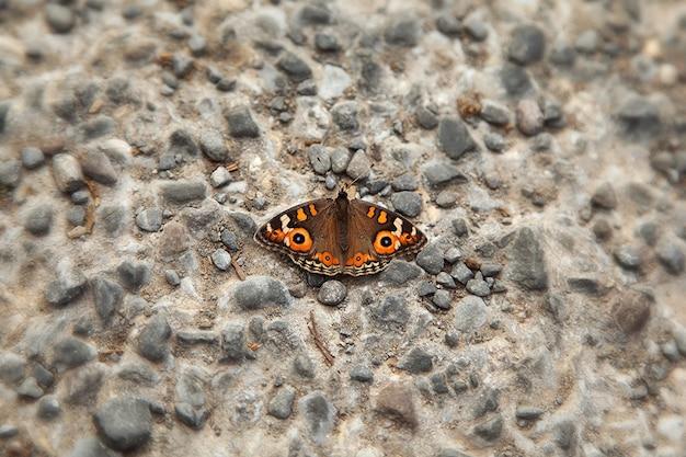 Крупным планом бабочки на скалистой стене Бесплатные Фотографии