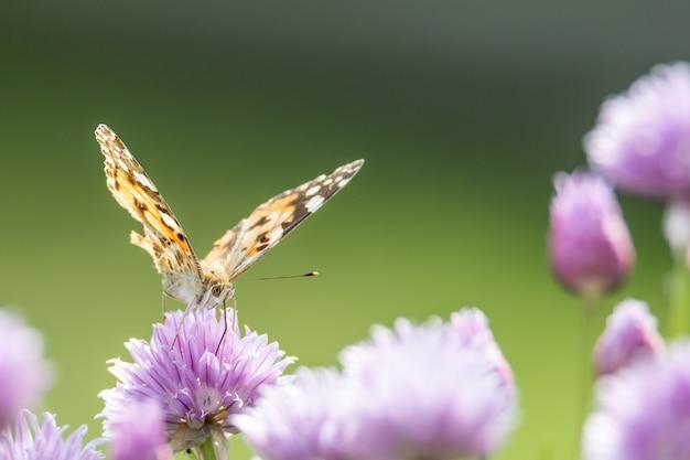 Крупным планом бабочка сидит на фиолетовом цветке с размытым фоном Бесплатные Фотографии