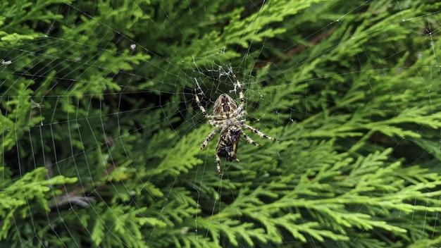 Крупный план перекрестного паука в сети под солнечным светом с зеленью на размытых Бесплатные Фотографии