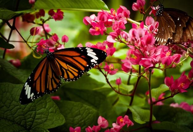 Крупный план danaus genutia на цветках под солнечным светом Бесплатные Фотографии