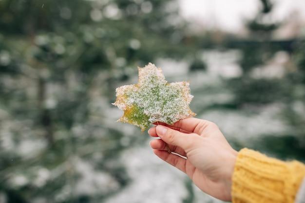 Крупный план зеленого и желтого кленового листа, покрытого снегом, в руке молодой женщины. Premium Фотографии