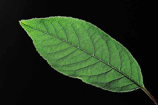 コピースペースと黒の背景に静脈の自然なパターンを持つ緑の葉のクローズアップ。上 Premium写真