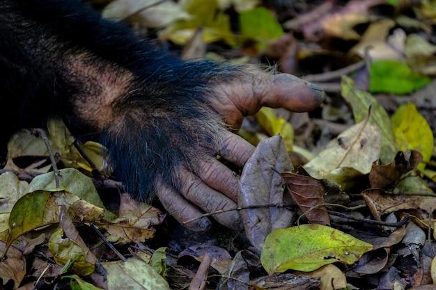 녹색과 노란색 잎으로 둘러싸인 지상에 원숭이의 손의 근접 촬영 무료 사진