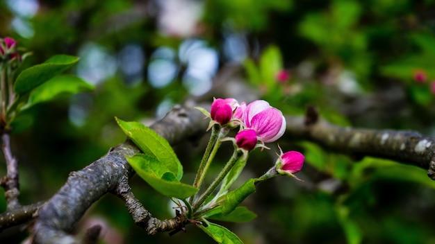 지점에 보라색 꽃의 근접 촬영 무료 사진