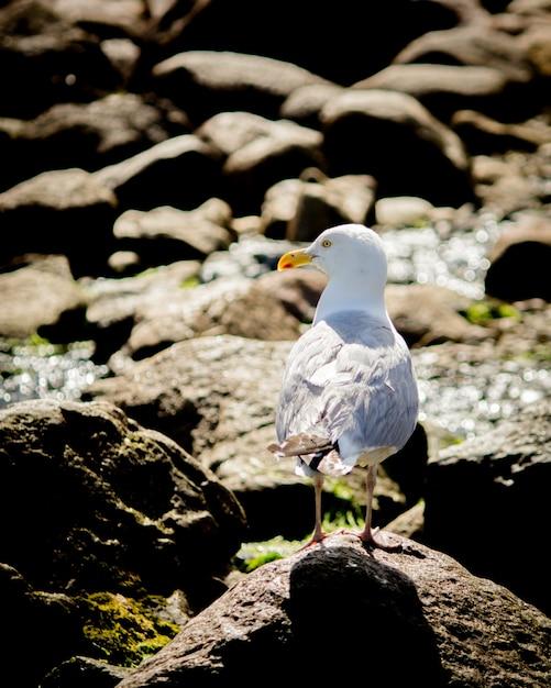 해안 근처 바위에 갈매기 서의 근접 촬영 무료 사진