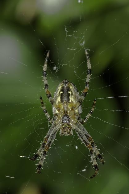 緑と太陽の下でweb上のクモのクローズアップ 無料写真