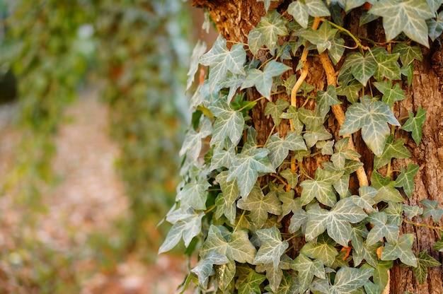 それに成長している葉を持つ木のクローズアップ 無料写真