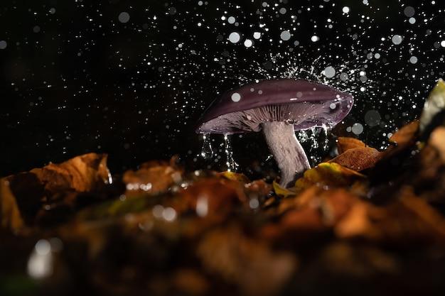 秋の紅葉に囲まれた降り注ぐ雨の下で野生のキノコのクローズアップ 無料写真