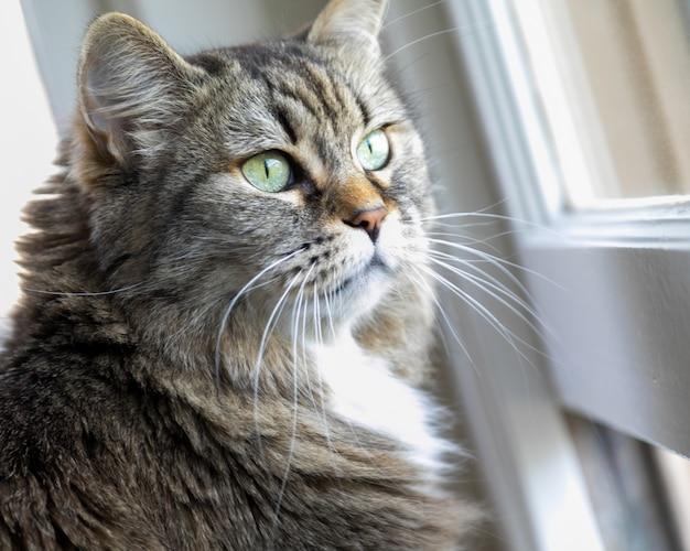 햇빛 아래 창 앞에 서있는 사랑스러운 국내 고양이의 근접 촬영 무료 사진