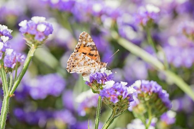Крупным планом красивая бабочка или с закрытыми крыльями, едят медвяная роса Premium Фотографии