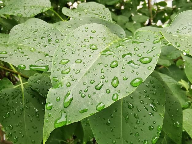 雨の後の水滴と明るい緑の葉のクローズアップ Premium写真