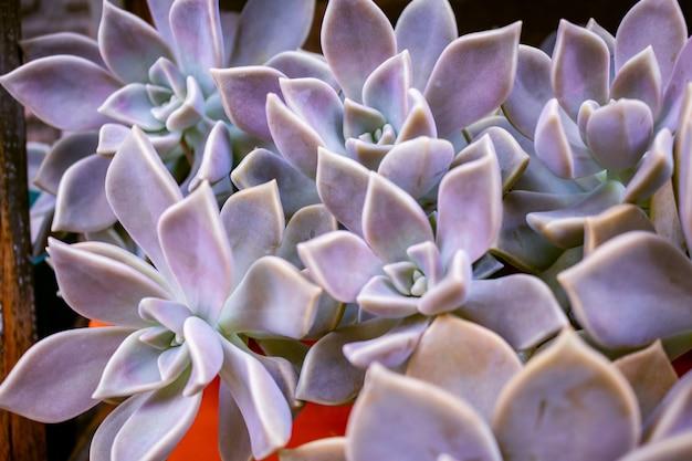 温室内のサボテン多肉植物の庭の砂漠の植物のクローズアップ Premium写真