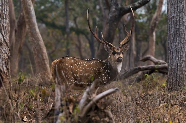 Крупным планом читал в национальном парке мудумалай в индии Бесплатные Фотографии