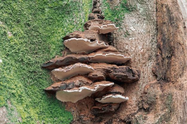 Крупный план обыкновенного многолетнего гриба кронштейна на коре дерева, покрытой мхом Бесплатные Фотографии