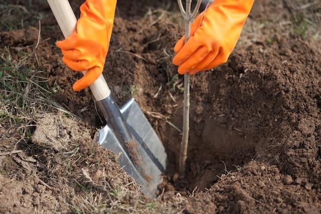 Макрофотография фермер посадки дерево Бесплатные Фотографии