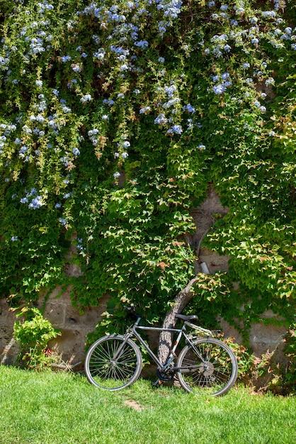 녹색 나무와 자전거의 근접 촬영 프리미엄 사진