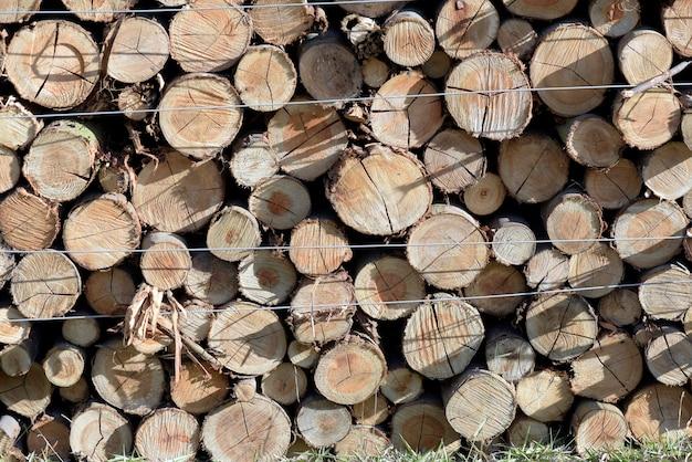 Крупным планом кучу стволов деревьев в лесопилке, в вид спереди Premium Фотографии