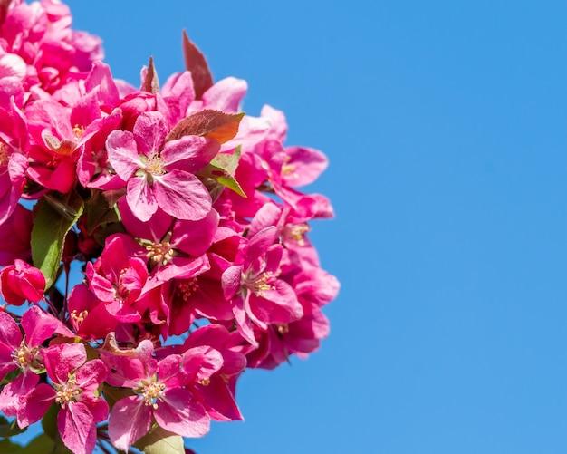 日光と日中の青い空の下で赤いリンゴの木の花のクローズアップ 無料写真