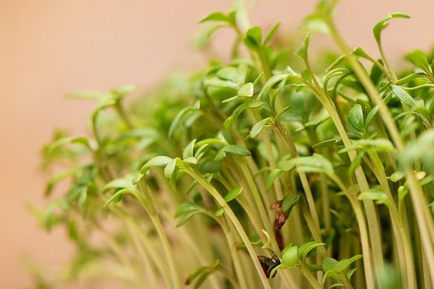 Крупный план проросшего зерна салата кресса растет на влажной льняной циновке Бесплатные Фотографии