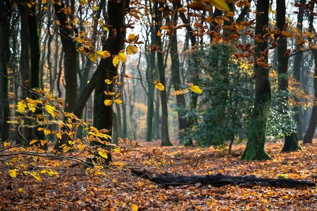 가을 숲에서 나무에 둘러싸인 잎으로 덮여 나뭇 가지의 근접 촬영 무료 사진