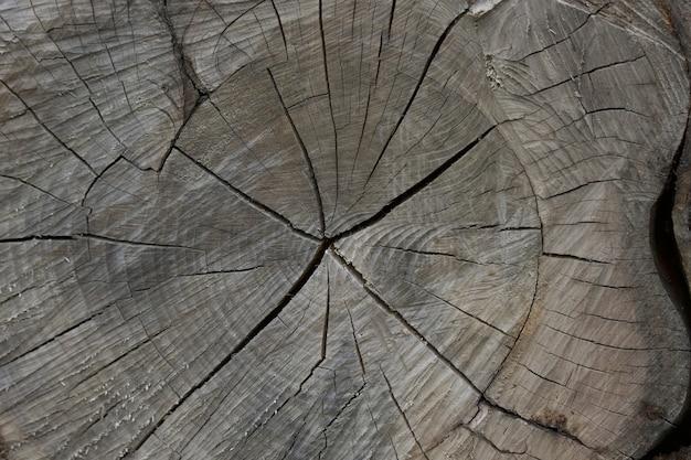 木の切り株のクローズアップ 無料写真