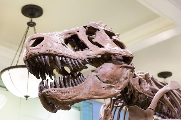 Крупный план головы тираннозавра. Premium Фотографии