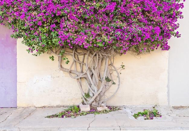 Крупным планом на ветвистом дереве ствол бумаги Premium Фотографии