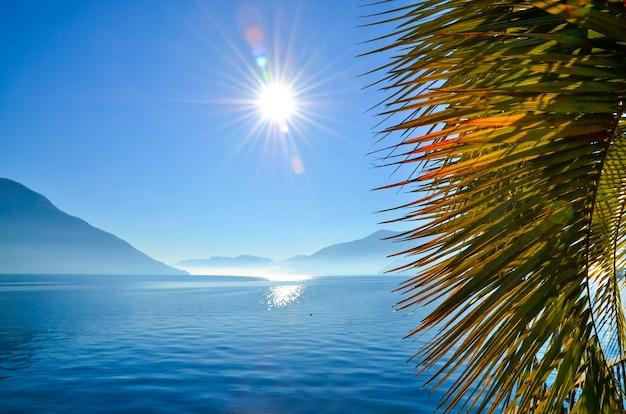Primo piano di foglie di palma circondate dal mare e dalle montagne sotto la luce del sole e un cielo blu Foto Gratuite
