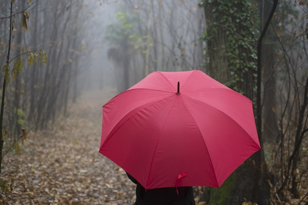 Closeup of a person with a red umbrella walking in a wooded alley on a foggy day Free Photo
