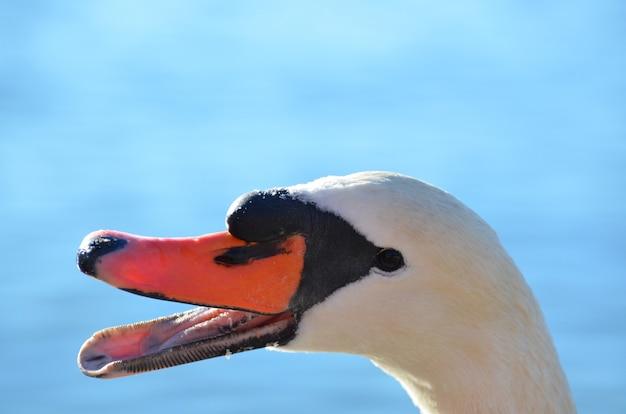 Maschera del primo piano di un cigno bianco sull'azzurro Foto Gratuite