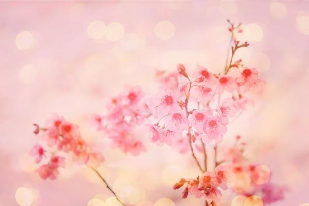 Closeup Of Pink Sakura Flower With Blurred Background Photo