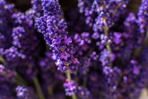 Closeup purple lavender branches on blurred Premium Photo