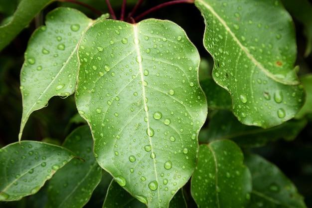 Closeup raindrops on green leaves Free Photo