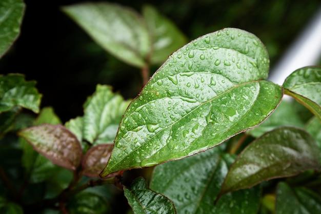 Closeup raindrops on leaves Free Photo