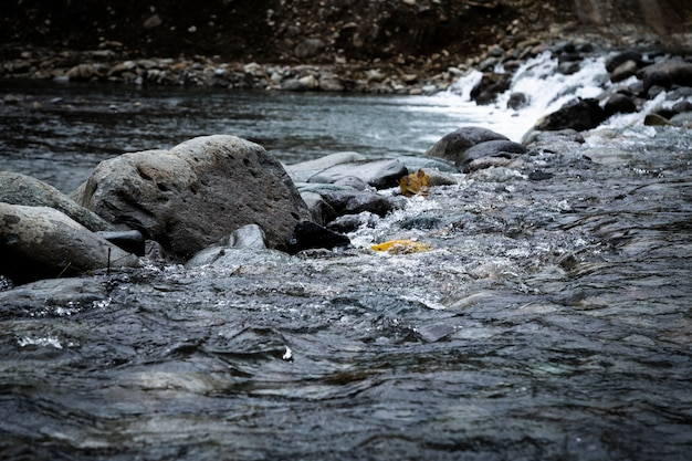 Closeup rocks in the water landscape Free Photo