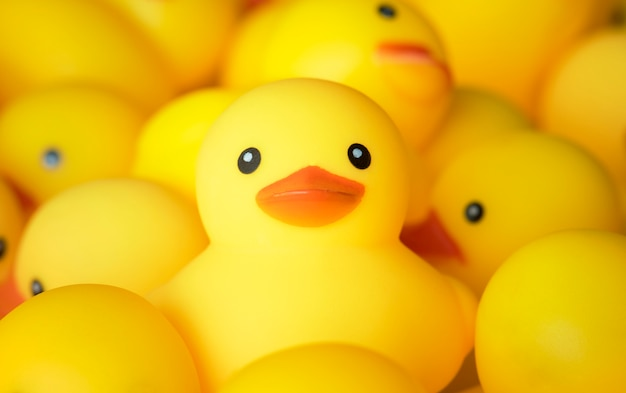 Closeup of rubber duckies Free Photo