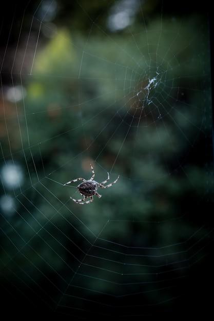 ウェブ上を歩く黒いクモのクローズアップの選択的なフォーカスショット 無料写真