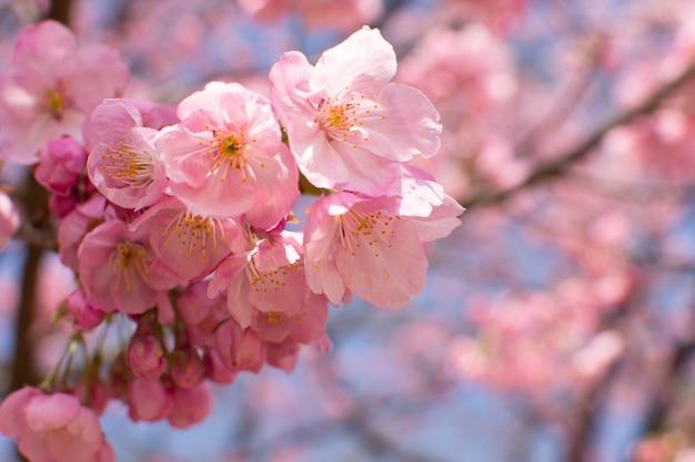 나무에 성장하는 벚꽃의 근접 촬영 선택적 초점 샷 무료 사진