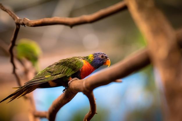 横向きの木の枝に座っている熱帯のオウムのクローズアップの選択的なフォーカスショット 無料写真