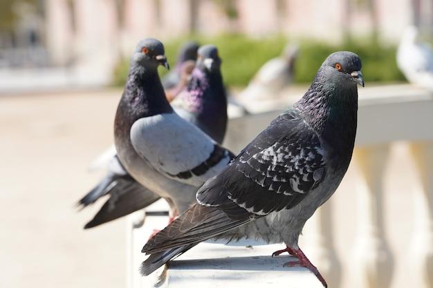 Крупным планом селективный фокус выстрел голубей в парке с зеленью Бесплатные Фотографии