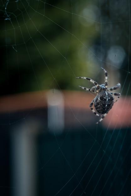 Vista del primo piano del fuoco selettivo di un ragno nero che cammina su un web Foto Gratuite