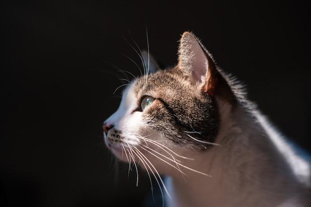 Primo piano vista selettiva del bellissimo gatto domestico con occhi verde chiaro Foto Gratuite