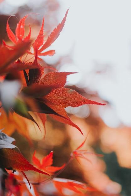 Closeup shot of beautiful autumn leaves on a tree Free Photo