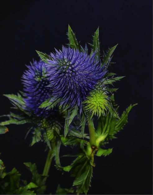 Colpo del primo piano di bellissimi fiori con petali viola blu Foto Gratuite