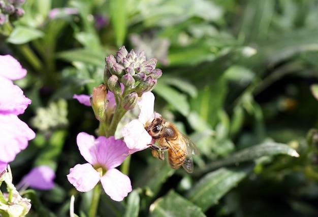Colpo del primo piano di un'ape seduta su un fiore Foto Gratuite