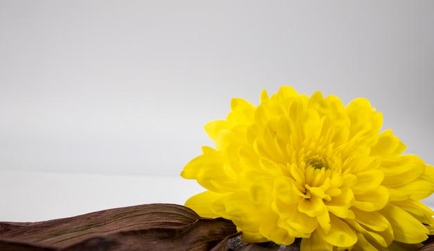 Colpo del primo piano di un grande fiore giallo Foto Gratuite