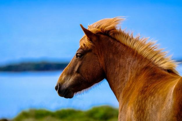 Colpo del primo piano di un cavallo marrone con sfondo naturale vago Foto Gratuite