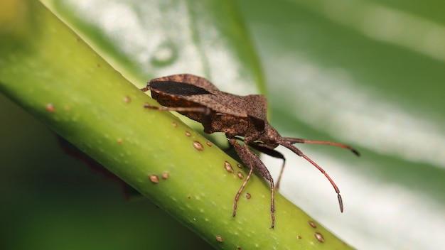 Colpo del primo piano di un bug di scudo marrone sullo stelo Foto Gratuite