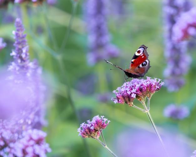 Colpo del primo piano di una farfalla su un fiore sotto la luce Foto Gratuite